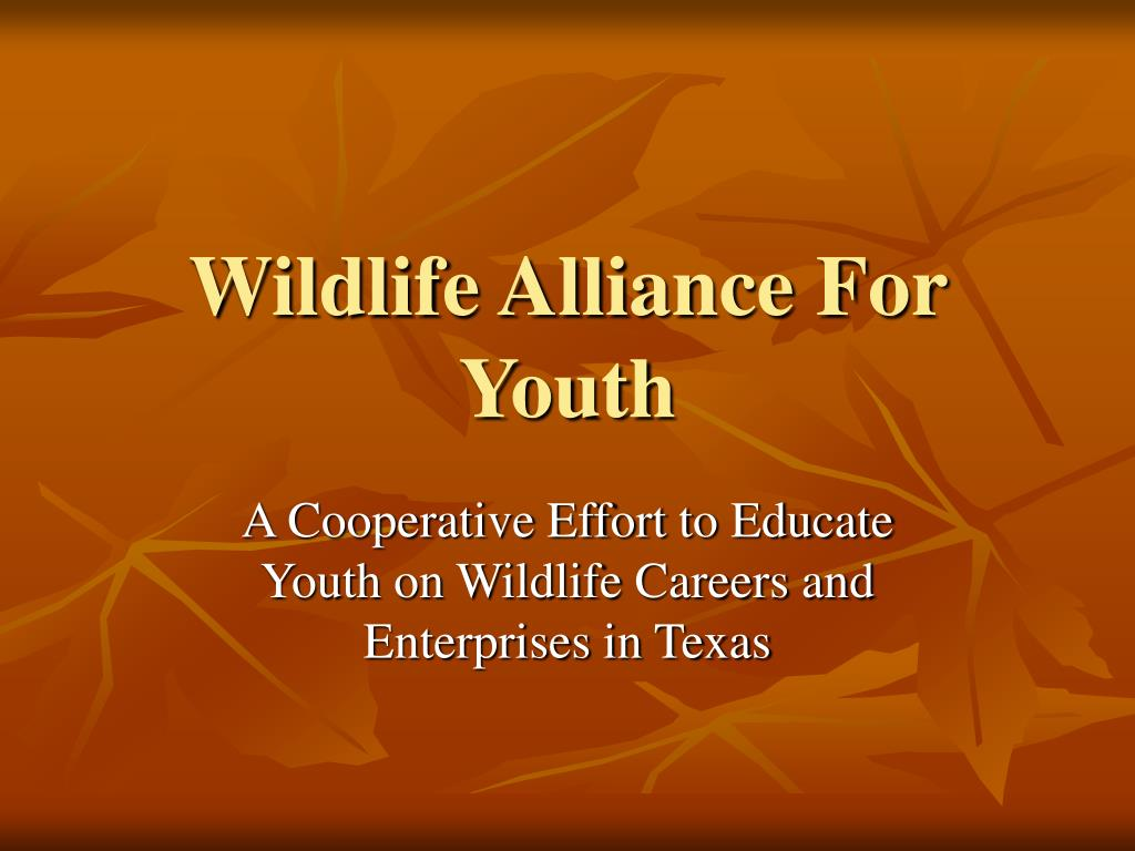 wildlife alliance for youth l.