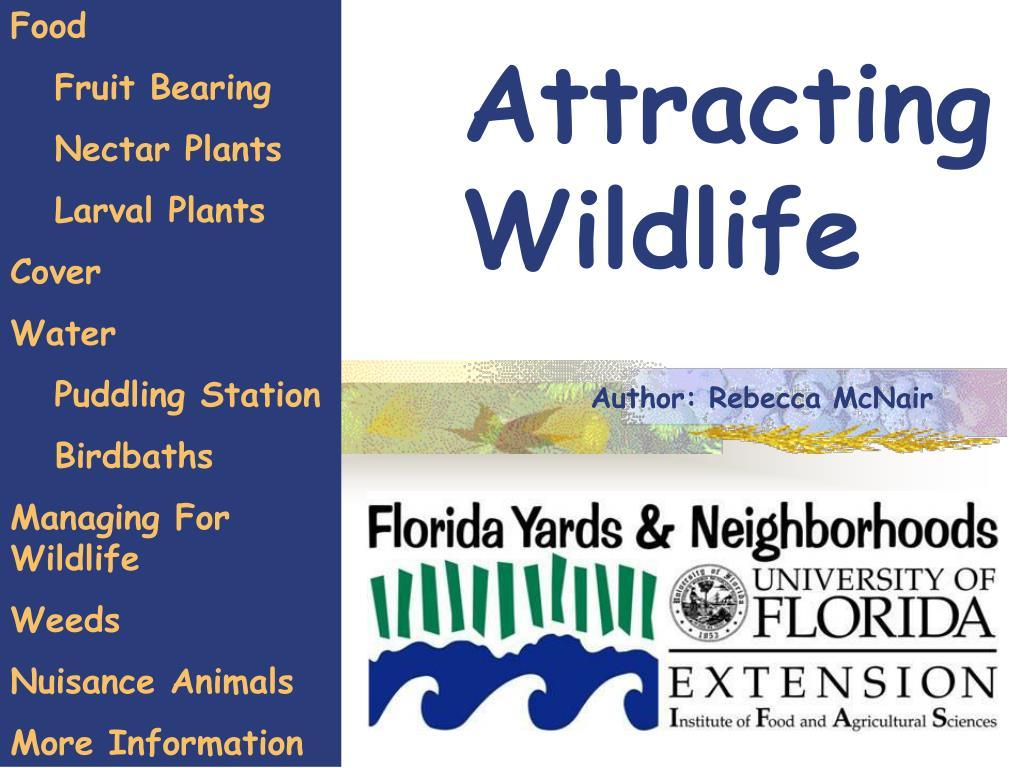 attracting wildlife l.