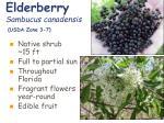 elderberry sambucus canadensis usda zone 3 7