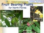 fruit bearing plants for north florida