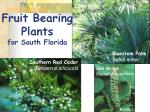 fruit bearing plants for south florida