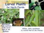 larval plants for north florida