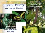 larval plants for south florida