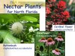 nectar plants for north florida