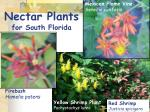 nectar plants for south florida