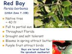 red bay persia borbonia usda zone 7 10b