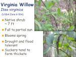 virginia willow itea virginica usda zone 6 10a