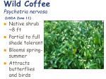 wild coffee psychotria nervosa usda zone 11