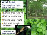 wild lime zanthozylum fagara usda zone 11