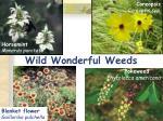 wild wonderful weeds