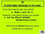d a wild baby belongs in its nest