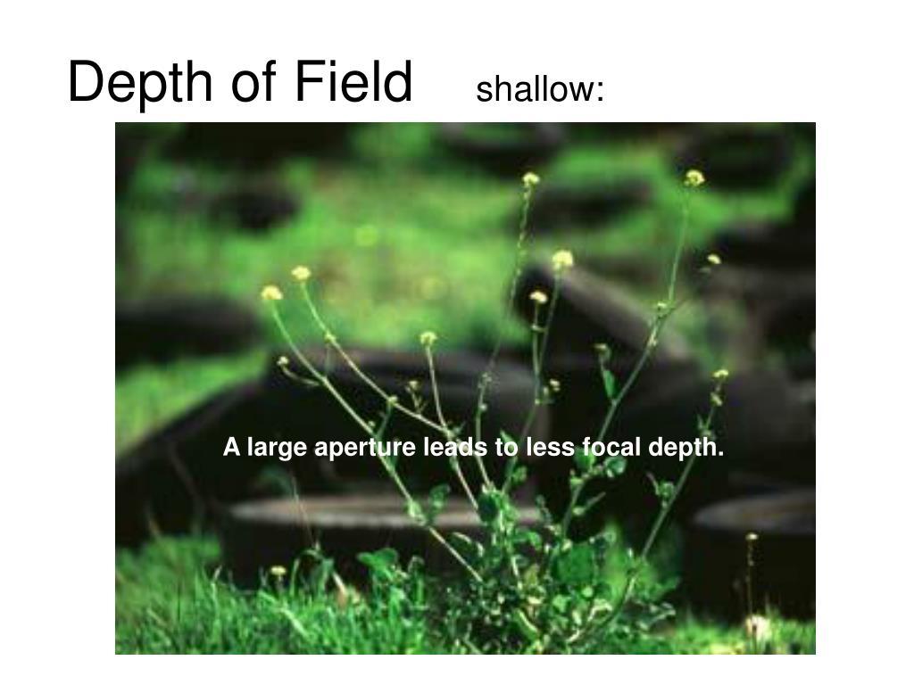 depth of field shallow l.