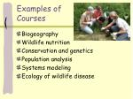 examples of courses