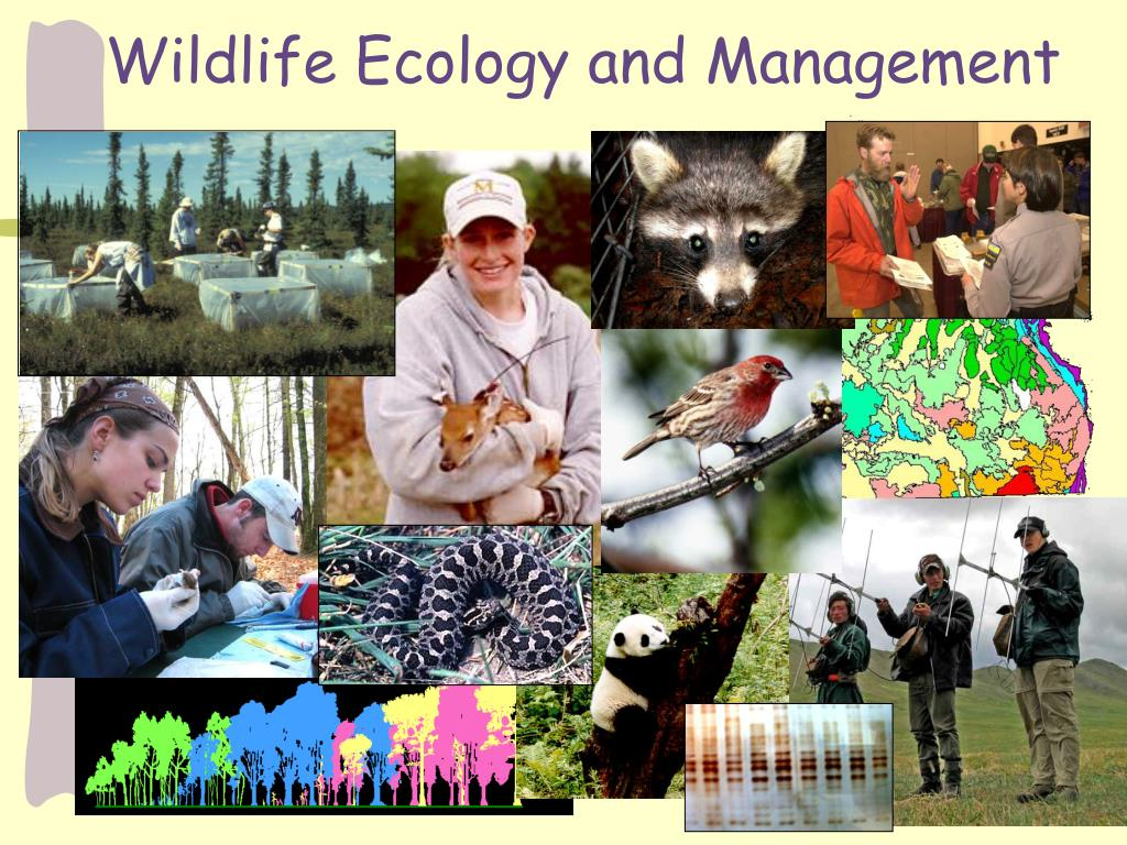 wildlife ecology and management l.