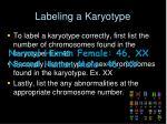 labeling a karyotype