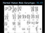 normal human male karyotype 46 xy