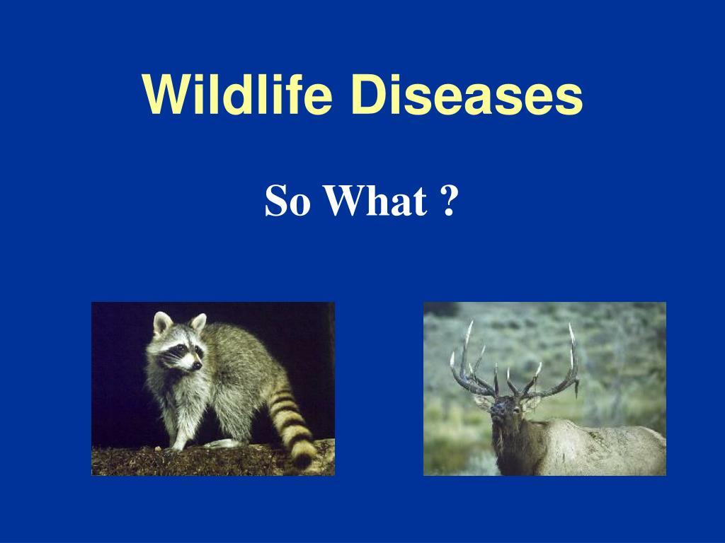 wildlife diseases l.