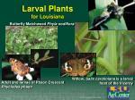 larval plants for louisiana
