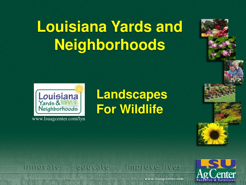louisiana yards and neighborhoods l.