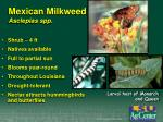 mexican milkweed asclepias spp