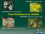 plant wildflowers for wildlife
