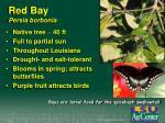 red bay persia borbonia