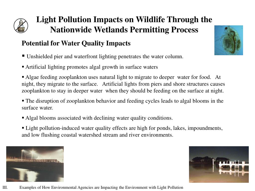 PPT - Understanding the Effects of Light Pollution on