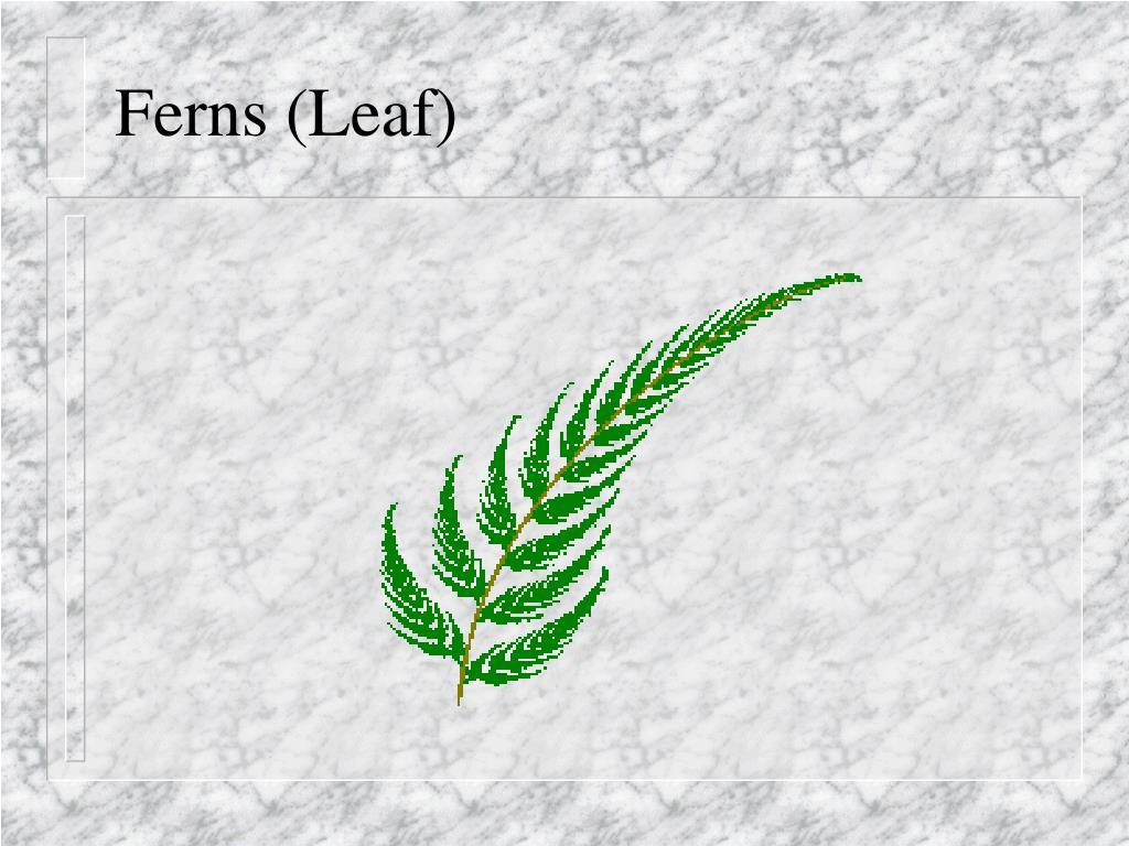 Ferns (Leaf)