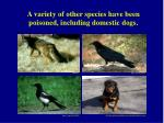 a variety of other species have been poisoned including domestic dogs