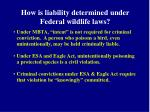 how is liability determined under federal wildlife laws