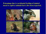 poisonings due to accidental feeding of tainted meat to captive animals have also been reported