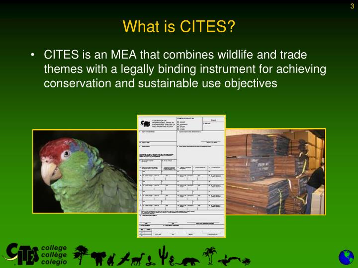 What is cites3