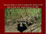 raccoon dog is a host of original rv strains in far east of asia and target species for orv
