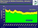 beef cows heifers inventory january 1 pennsylvania