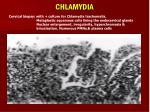 chlamydia61