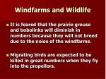 windfarms and wildlife