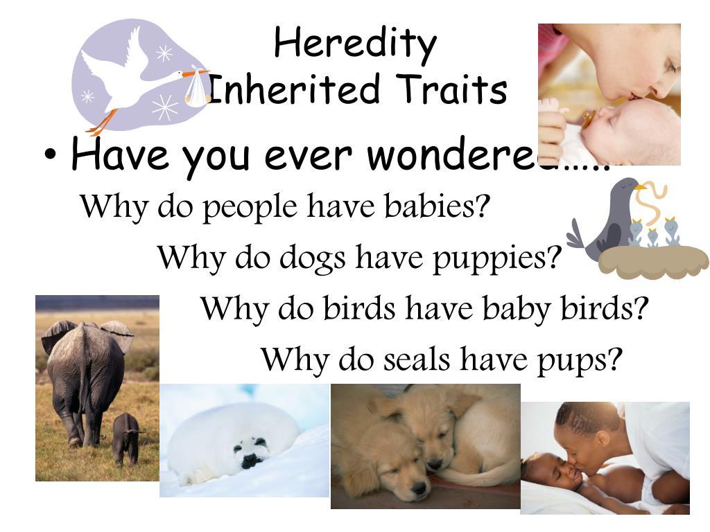 heredity inherited traits l.