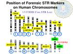 position of forensic str markers on human chromosomes