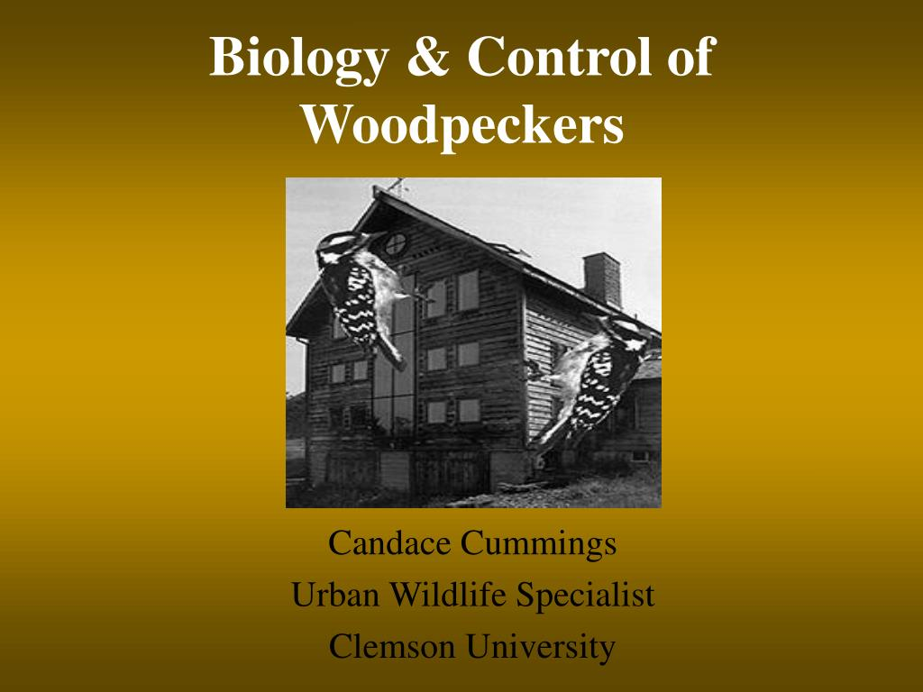 biology control of woodpeckers l.