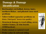 damage damage identification8