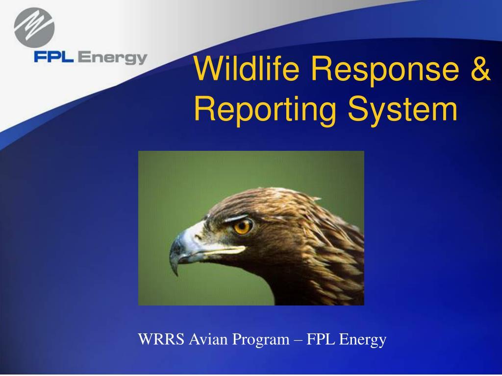 wildlife response reporting system l.