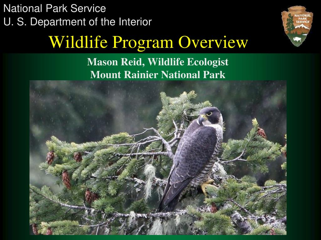 wildlife program overview l.