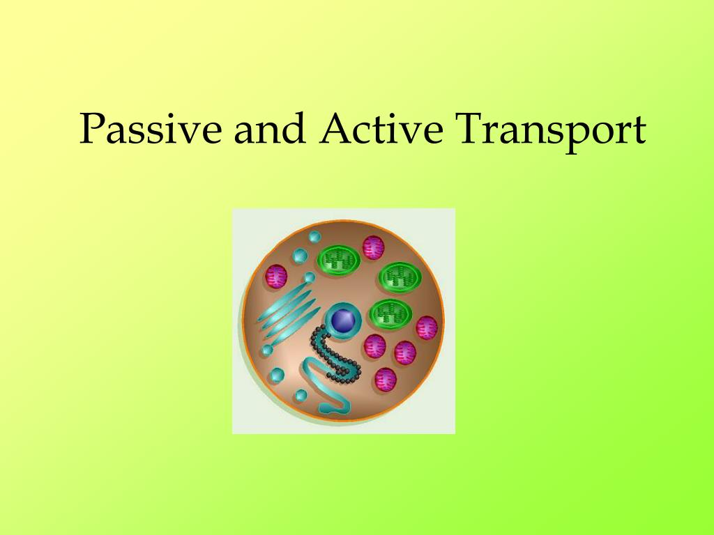 passive and active transport l.