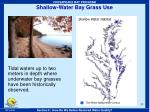 shallow water bay grass use33