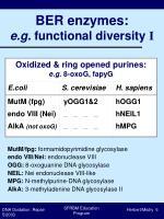 ber enzymes e g functional diversity i