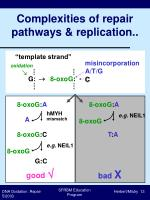 complexities of repair pathways replication