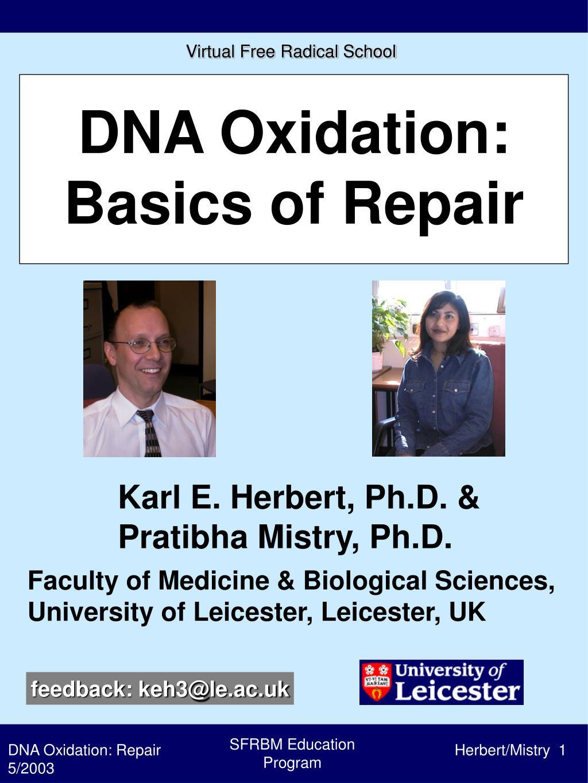 dna oxidation basics of repair l.