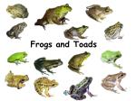 frogs and toads15