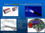 role of myelin in cerebral connectivity