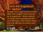 into the sugarbush